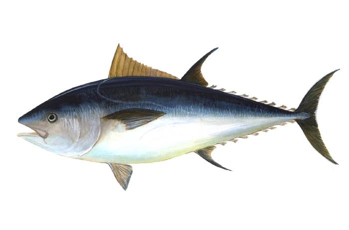 túnfiskur
